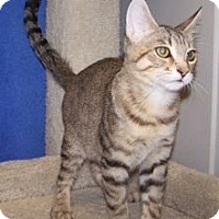 Adopt A Pet :: K-Hart4-Alfred - Colorado Springs, CO