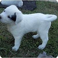 Adopt A Pet :: Wesley - Adamsville, TN