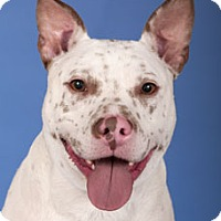 Adopt A Pet :: Toby - Lincolnwood, IL