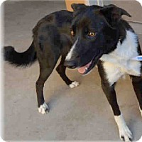 Adopt A Pet :: Jazzie Urgent - Sacramento, CA