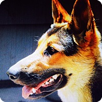 Adopt A Pet :: Zoey (Courtesy Listing) - Cedar Rapids, IA