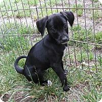 Adopt A Pet :: Tunip - Middletown, RI