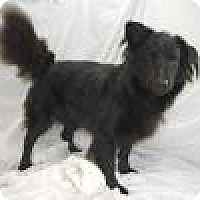 Labrador Retriever/Collie Mix Dog for adoption in Jackson, Mississippi - Watson