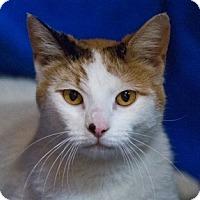 Adopt A Pet :: Whitnee - Calgary, AB