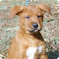 Adopt A Pet :: Cooper - Stamford, CT