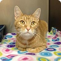 Adopt A Pet :: B-2 Ollie - Triadelphia, WV