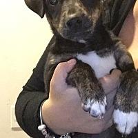 Adopt A Pet :: Madeleine - Foster, RI