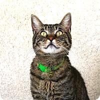 Adopt A Pet :: Xena - Los Angeles, CA