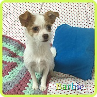 Adopt A Pet :: Barbie - Hollywood, FL