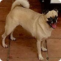 Adopt A Pet :: Francesca - Ocean Ridge, FL
