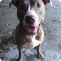 Adopt A Pet :: Brooklyn - Concord, CA
