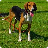 Adopt A Pet :: Ralph-080511j - Tupelo, MS