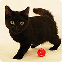 Adopt A Pet :: Cher - Toccoa, GA