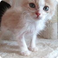 Adopt A Pet :: Chervil - San Bernardino, CA