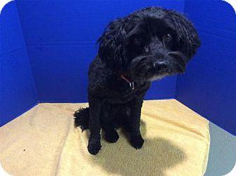 Terrier (Unknown Type, Medium) Dog for adoption in Pomona, California - I1262668