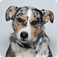 Adopt A Pet :: Tucker - Westfield, NY