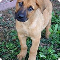 Adopt A Pet :: Paisley D3363 - Shakopee, MN