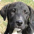 Adopt A Pet :: Taylor