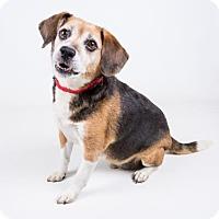 Adopt A Pet :: Reggie - Adrian, MI