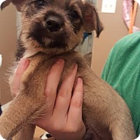 Adopt A Pet :: Queso - Salt Lake City, UT