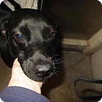 Adopt A Pet :: Joe - Colfax, IL