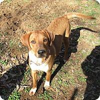Adopt A Pet :: Hailey - Harrisonburg, VA