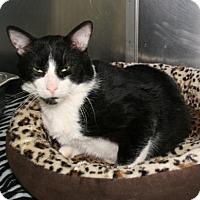 Adopt A Pet :: Stumble - Bradenton, FL