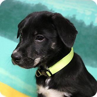 Petsmart Green Bay Adoptable Dogs