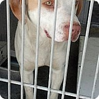 Adopt A Pet :: Hansel URGENT - San Diego, CA