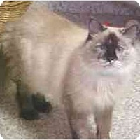 Adopt A Pet :: Samsara - Lunenburg, MA