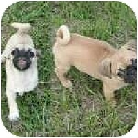 Adopt A Pet :: Mini Me and Chunky Monkey - Windermere, FL