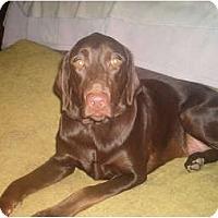 Adopt A Pet :: Jugg - North Jackson, OH
