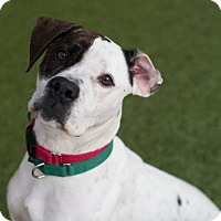 Adopt A Pet :: Matilda - Richmond, VA