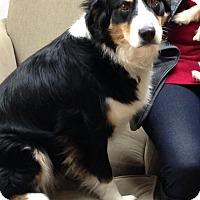 Adopt A Pet :: Aspen - Knoxville, TN
