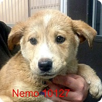 Adopt A Pet :: Nemo - baltimore, MD