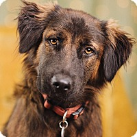 Adopt A Pet :: Florence - Portland, OR