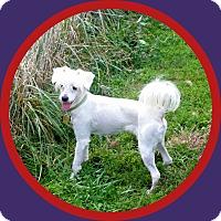 Adopt A Pet :: Remington - Elkhart, IN
