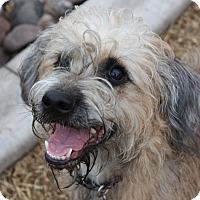 Adopt A Pet :: Cheyenne - Henderson, NV
