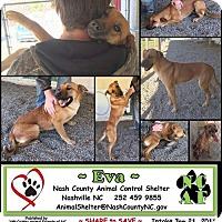 Adopt A Pet :: eve - Willingboro, NJ