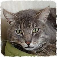 Adopt A Pet :: Big Boy - Pueblo West, CO