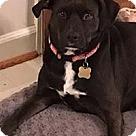 Adopt A Pet :: Tipsy/Roxy