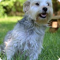 Adopt A Pet :: Mocha - Waldorf, MD