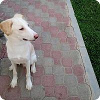 Adopt A Pet :: Prince - Alexandria, VA