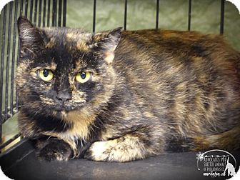Domestic Shorthair Cat for adoption in Marlinton, West Virginia - Speckles