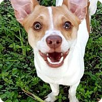 Adopt A Pet :: Jax - Key Largo, FL