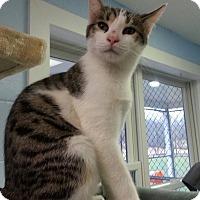 Adopt A Pet :: Parrot - Shinnston, WV