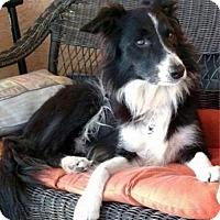Adopt A Pet :: Lola - Bradenton, FL