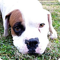 Adopt A Pet :: Hogan - Mocksville, NC
