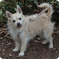 Adopt A Pet :: Chinchilla - San Francisco, CA