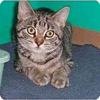 Adopt A Pet :: Steve Irwin - Secaucus, NJ